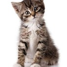 Wel of niet de kattenbak verschonen tijdens de zwangerschap ?